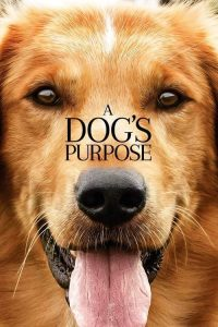 download or watch A Dog's Purpose full movie online free openload